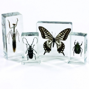 Insect set of 4