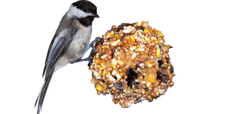 Pine cone feeders-2